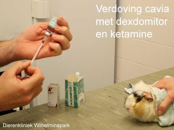 We geven ene injectie anesthesie met dexdomitor en ketamine