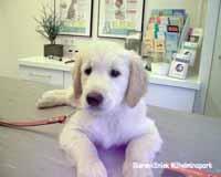 Bij deze jonge hond was een melkhoektand afgebroken