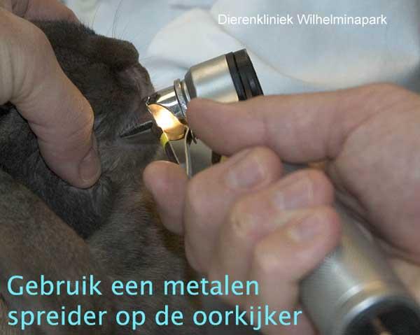 Een beknspectie bij het konijn door middel van een metalen spreider op de oorkijker