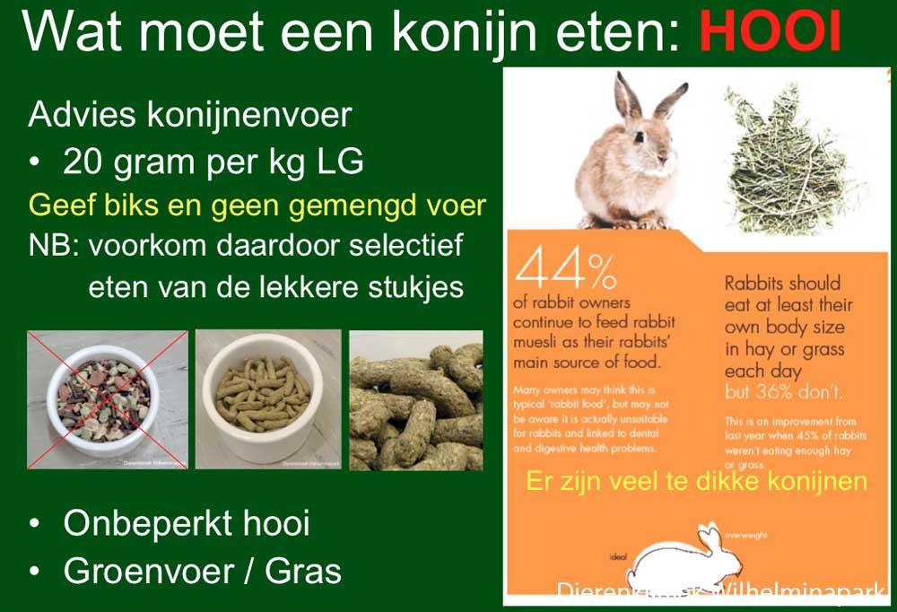 Ons voedingsadvies vor een konijn