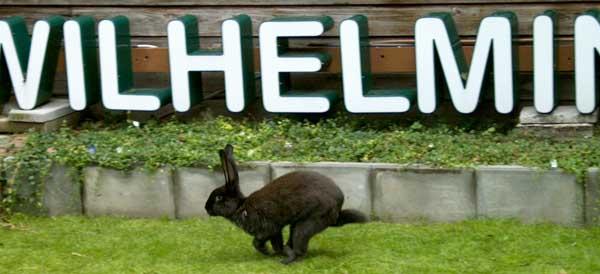 Een konijn op weg naar het WIlhelminapark