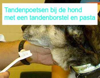 Tandenpoetsen met een tandenborstel en tandpasta: help ik wil geen harde tandenborstel in mijn mond denk Fonzie de hond van Liesbeth haar ouders.